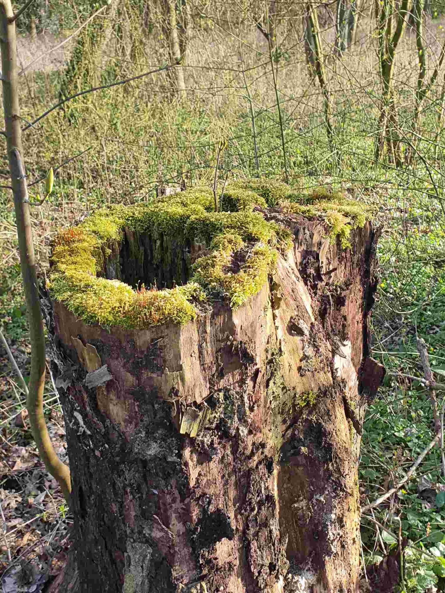 Baumstumpf Elfenfestung