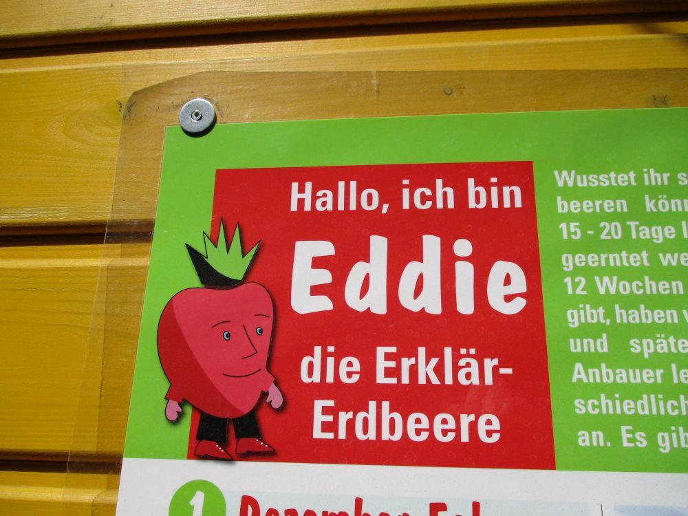 Eddie, die Erklär-Erdbeere
